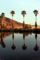 Soda springs palms
