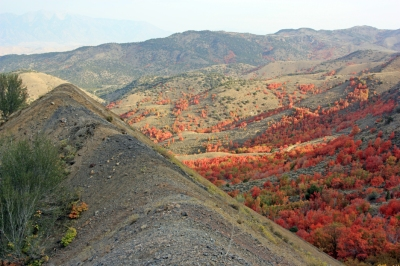 Valley of maple trees from a mine dump in the East Tintic Mountains