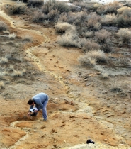 David Black taking pH readings in the middle wash draining the mine dump at Silver City.