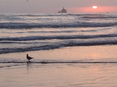 Sunset seagull 1
