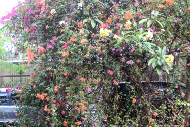 Flowering bushes
