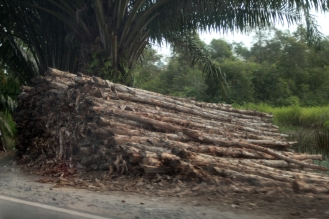 Galum wood