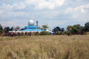 Mosque and rice field