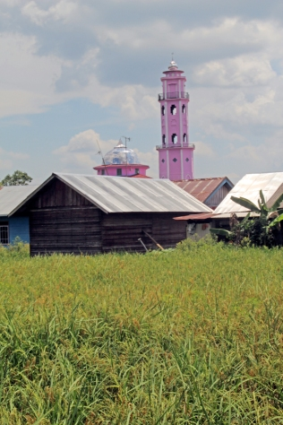 Pink mosque and rice field