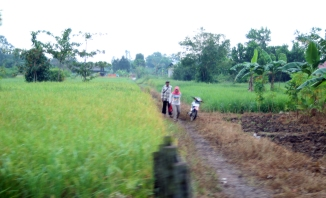 Early morniing rice field