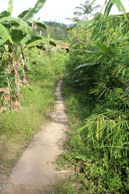 Narrow path into jungle