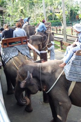 Loading the elephants