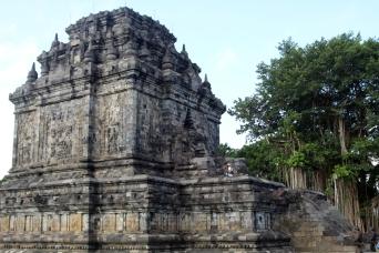 Mendot temple with banyan tree