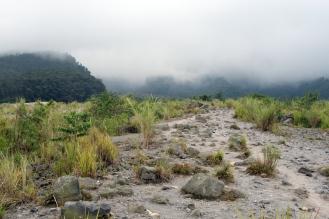 Plants on lava flow