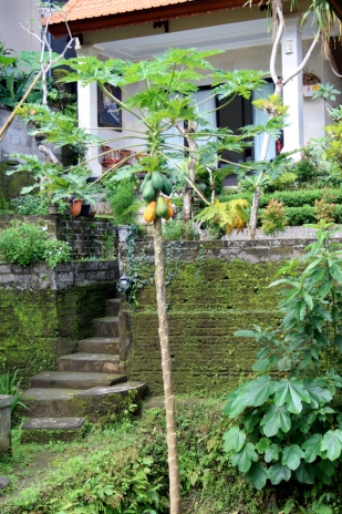 Stairs and papaya tree