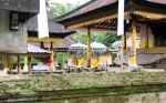 Yellow draped shrines