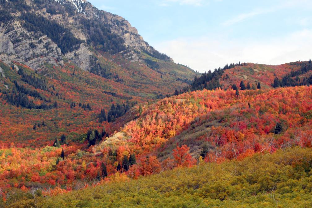 Fall colors back of Squaw Peak