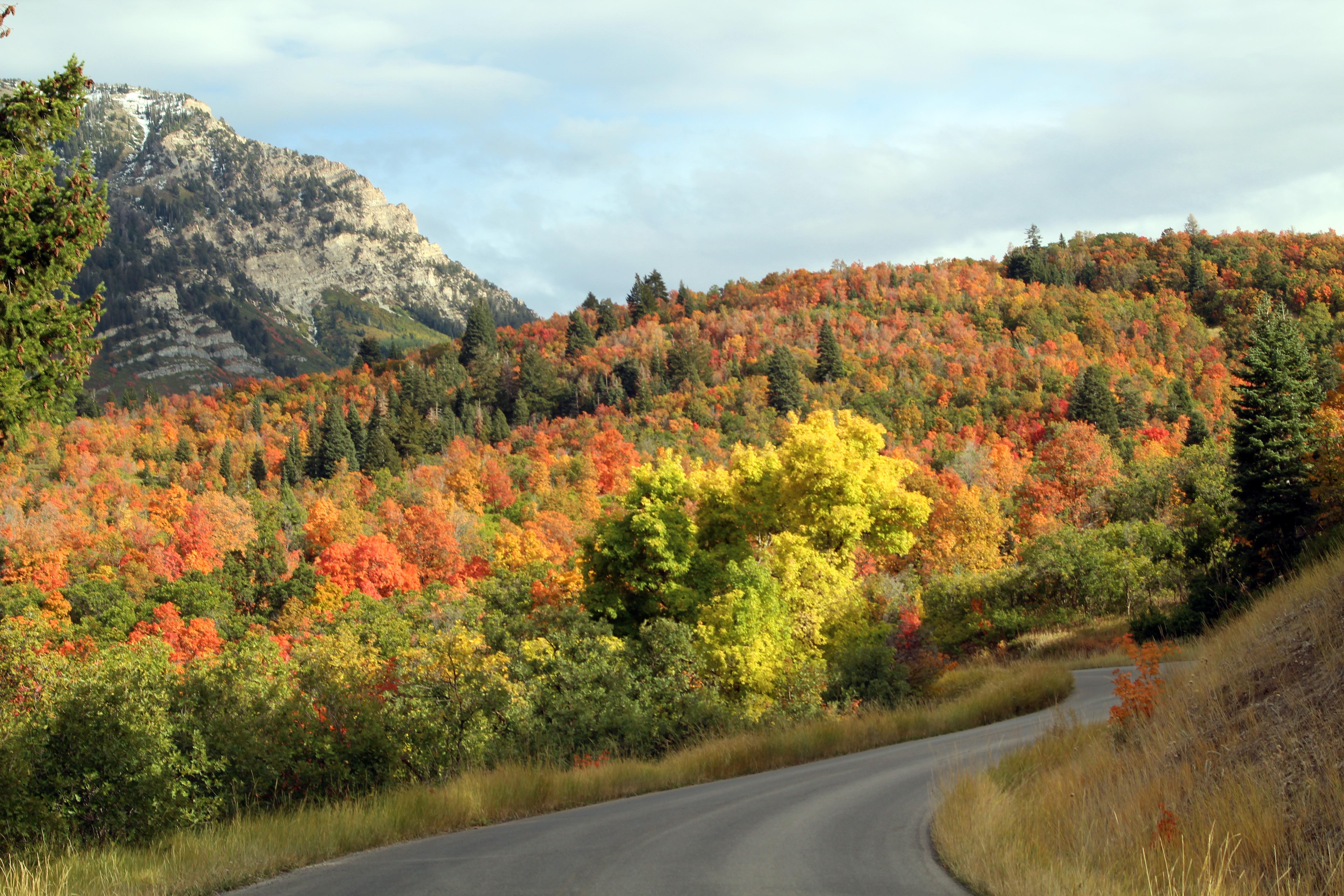 Road to Squaw Peak-fall 2017