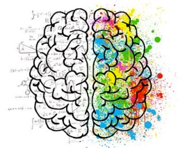 Brain hemispheres-s